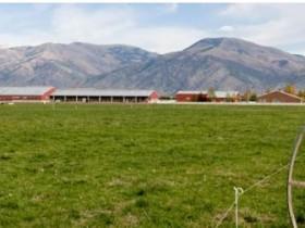 关于犹他州乳业的十大事实