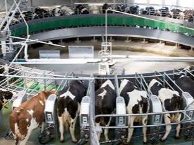 减少恐惧能够增加产奶量-2