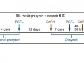 更有效的Presynch流程