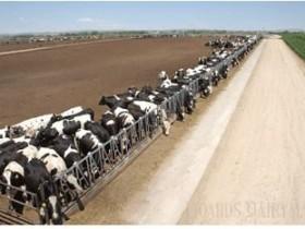 断奶后后备牛成本分析