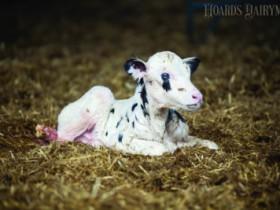 犊牛被动免疫失败