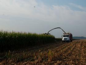 玉米青贮发展史