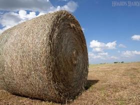 影响干草质量的7大因素