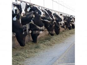 关于后备牛饲养管理的新观点