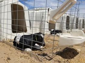 电解质溶液能挽救犊牛生命