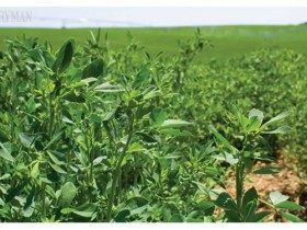 USDA干草市场价格-10月26日