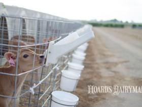 犊牛培育成本的必要性