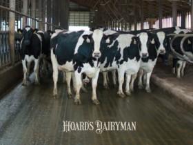 奶牛群体免疫力的建立