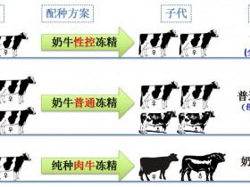特邀专栏|奶牛场新的盈利点:奶肉牛复合养殖模式