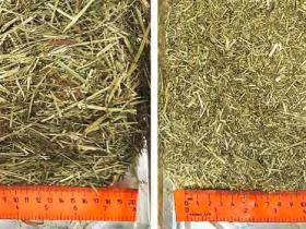 日粮粗饲料切割长度对纤维消化率的影响及质量评估分析