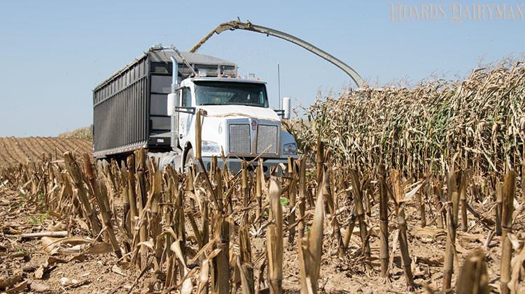 玉米青贮定价