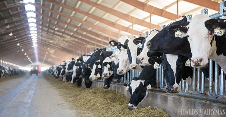 是否需要选择甲烷排放量低的奶牛?