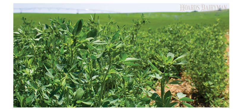 USDA干草市场价格-10月19日