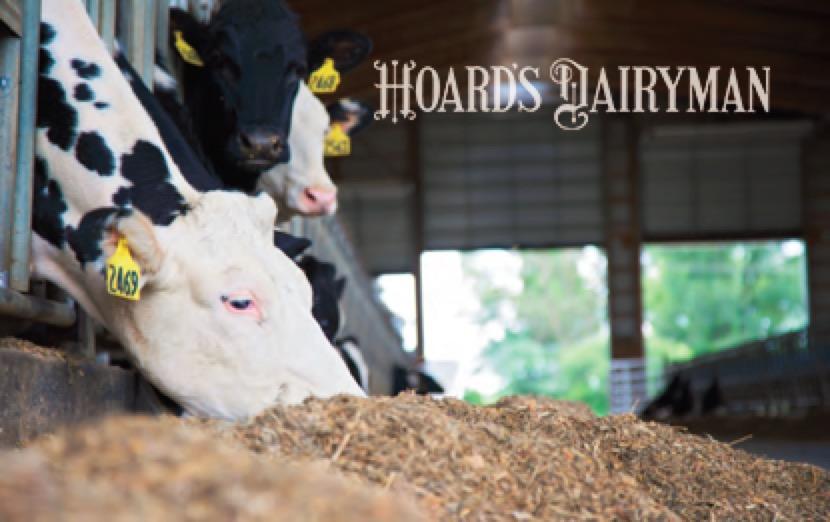 干奶期奶牛日粮的能量管理