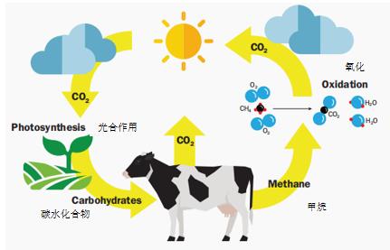 牛—碳自然循环的组成部分